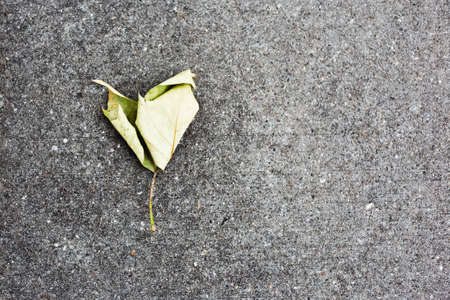 Close-up of tree leaf in shape of heart on asphalt. Textured background with copy space.