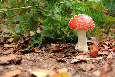 toxic mushroom: Toxic mushroom