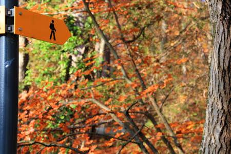 flechas: Walking Track sesi�n