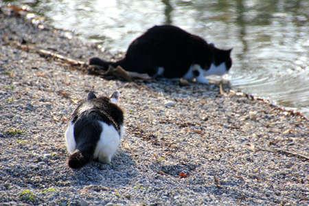 creeping: creeping cat