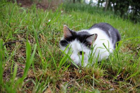 sneak: Creeping cat