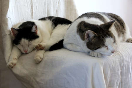 shop for animals: Couple is sleeping