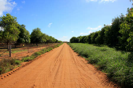 straight path: Straight road