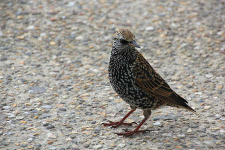 sitting on the ground: A bird is sitting on the ground