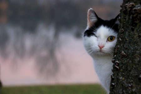 one eye: Cat with one eye Stock Photo