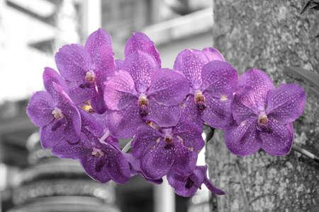flores moradas: purpleorchids