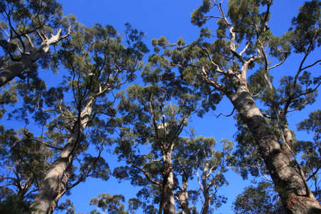 tree branches: Treetops