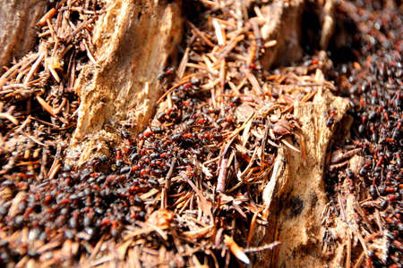 colony: ant colony