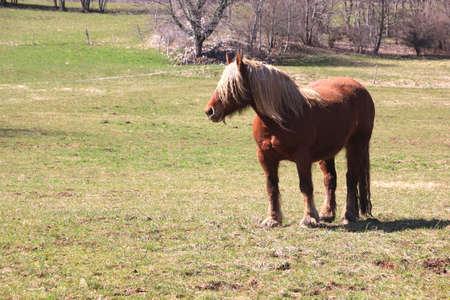 heavy: Heavy Horse