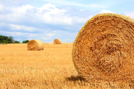 Dry straw ball on a sunny summer day Stock Photo