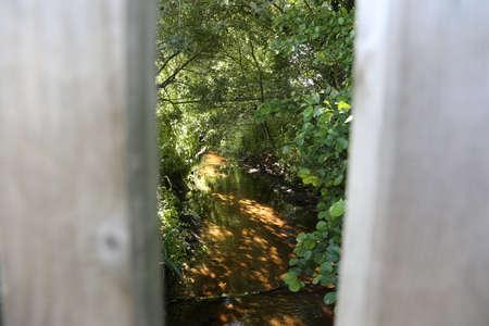 Looking through two planks into nature Zdjęcie Seryjne
