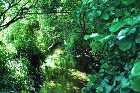 Lush green foliage around a little river Zdjęcie Seryjne