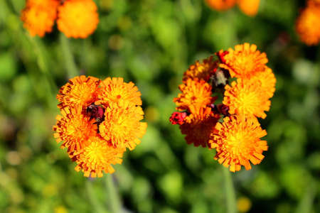 Orange summer flower Zdjęcie Seryjne