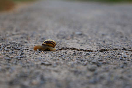 Snail crossing the pathway