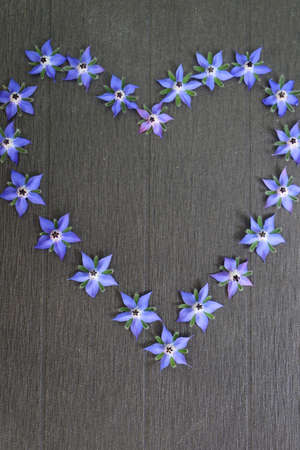 Blue borage flower forms a heart on a black background