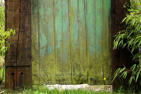 Green weathered wooden door to enter the garden