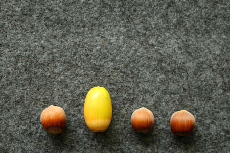 Be different three hazelnuts and a green acorn in a row
