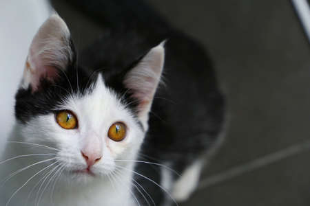 Cute black and white kitten is looking up