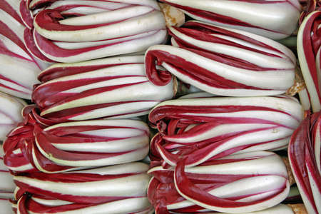 treviso: bitter red italian radicchio chicory from Treviso for sale in the province of Verona Stock Photo