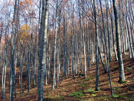 very dense forest in autumn in an Italian countryside Stock Photo - 9363655