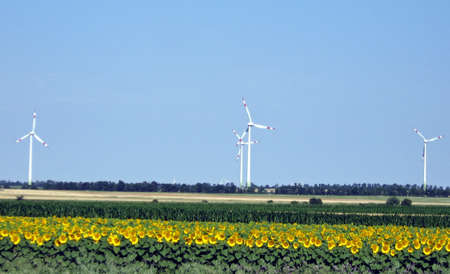 produce energy: a series of wind turbines that produce green renewable energy in Poland with sunflowers  Stock Photo