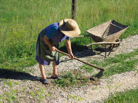 back hoe: old woman plowing the garden for planting vegetables
