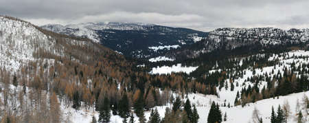 winter landscape in the mountains with yellow and green larch trees with white snow photo
