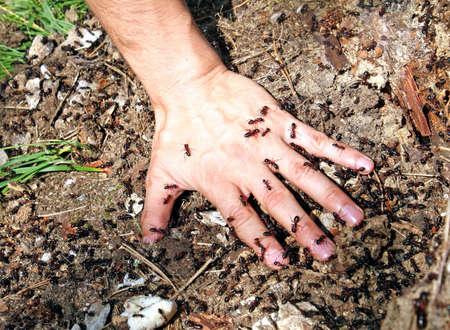 Baby Hand mit gezackten schwarzen Ameisen bedeckt Lizenzfreie Bilder