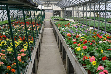 interior of a protected greenhouse for growing flowers and plants from garden photo