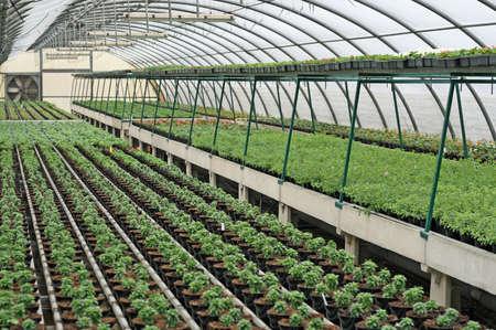 Innere eines Gew�chshauses f�r den Anbau von Blumen und Pflanzen