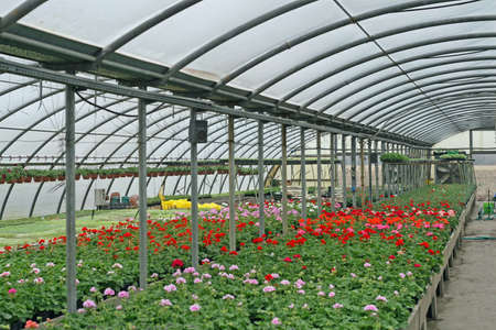 interior of a greenhouse for growing flowers and plants photo
