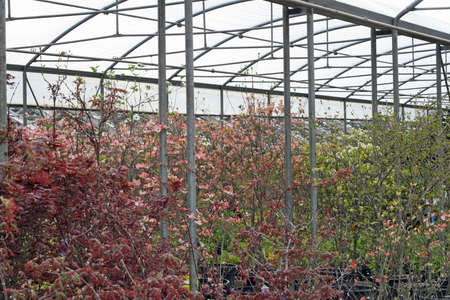 nurseries: steel and glass greenhouse for growing plants in winter Stock Photo
