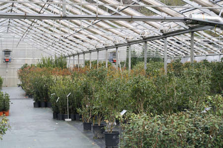 nurseries: interior of a greenhouse for growing plants in the heat