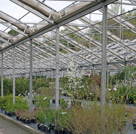 nurseries: interior of a greenhouse for growing plants in the heat in winter