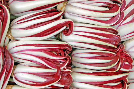 bitter red italian radicchio chicory from Treviso for sale photo