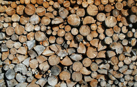 woodshed: cut tree trunks forming a huge outdoor Woodshed