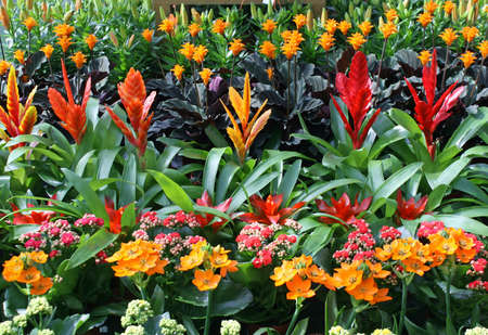 nurseryman: colorful plants for sale from a florist in a nursery of flowers