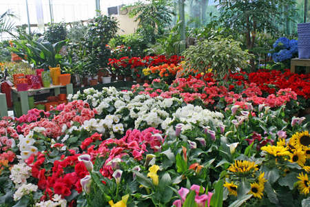 grocers: sunflowersand other flowers for sale by a florist in a nursery