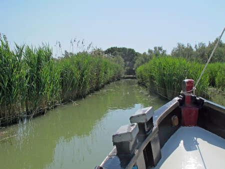 proceeds: procede intr�pidos barco del pantano aguas limo entre las ca�as