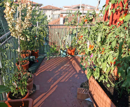 potted vegetables grown in a terrace of an apartment building in the city photo