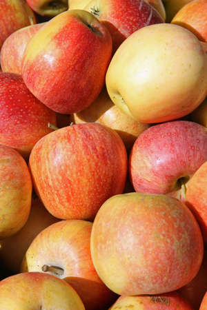 mature bright red apples on sale at the fruit market Stock Photo - 15500111