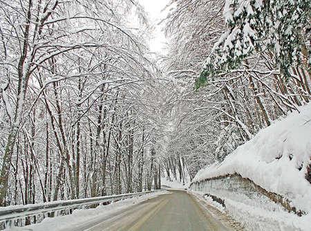 freshly fallen snow: ghiacciato strada di montagna con gli alberi pieni di neve appena caduta in una fredda giornata d'inverno
