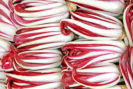 treviso: radicchio chicory from Treviso for sale Stock Photo