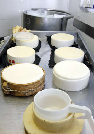rennet: cheese factory for the production of cheese and fresh caciotta cheese in various forms
