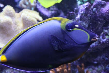 수족관에서 아름답고 밝은 열대 물고기 스톡 콘텐츠