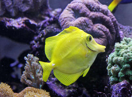 beautiful and bright tropical fish swimming in an aquarium photo