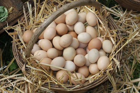old wicker basket with eggs laid on a soft straw from farmer photo