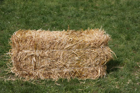 deposed: block dry straw cube deposed on green lawn