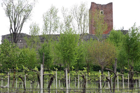 feudal: ancient tower of the medieval castle of Juliet with the row of vines Stock Photo