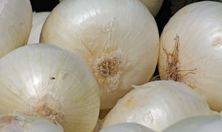 white Onion for sale at vegetable market photo
